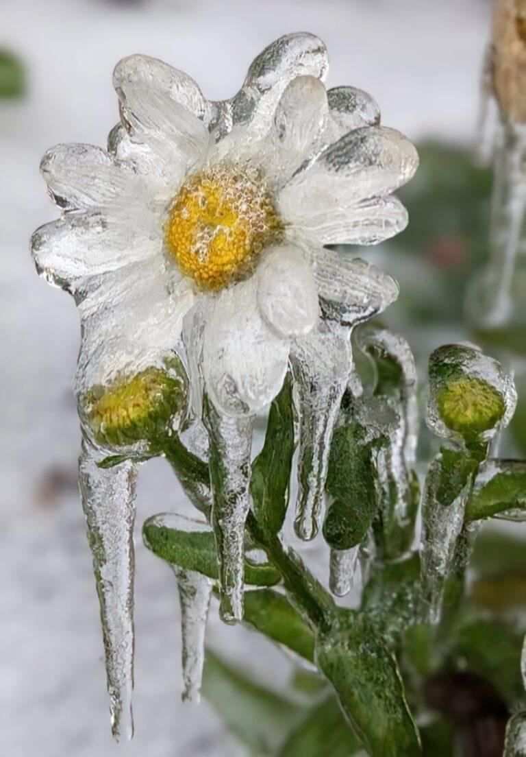 Ισχυρότατο επεισόδιο παγωμένης βροχής στην Οκλαχόμα των ΗΠΑ!