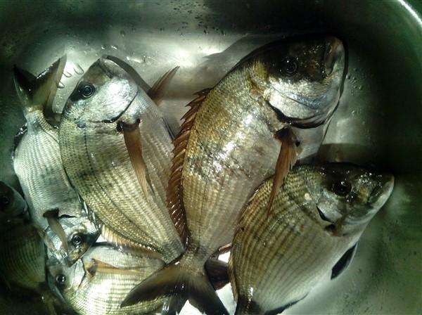Ακόμη μια εβδομάδα παράταση η απαγόρευση  ερασιτεχνικού ψαρέματος