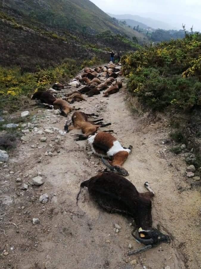Πορτογαλία: Κεραυνός σκοτώνει ακαριαία κοπάδι κατσικιών